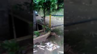 Video Ada orang yg LAGI pacar pohon bambu download MP3, 3GP, MP4, WEBM, AVI, FLV Agustus 2017