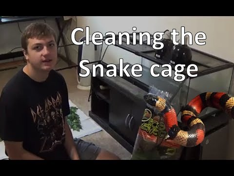Cleaning the Snake cage