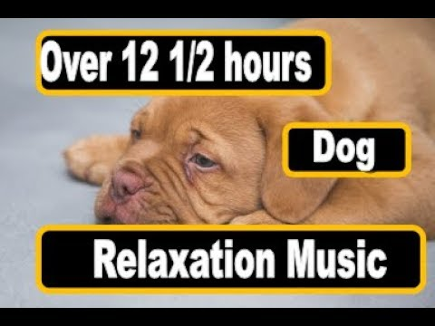 Over 12 12 hours of Soothing Music to Relax Your Puppy or Dog Beautiful
