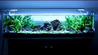 mr aqua 12 gallon planted tank staurogyne repens