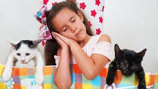 PIPONA Лера и ее балованные котята