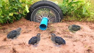Awesome Quick Bird Trap Using Car Tire And Electric Fan Guard - How to Make Bird With Water Pipe