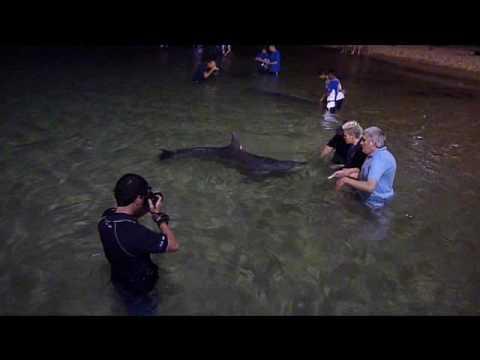 Dolphin Feeding At Tangalooma Island Resort Queensland Australia