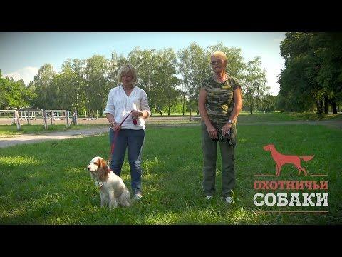 Охотничьи собаки. 26 серия. Русский охотничий спаниель