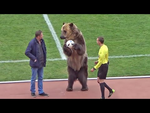 Animal welfare group condemns performing bear at Russian football match