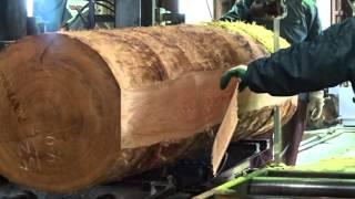 ドイツ樅の木の製材1