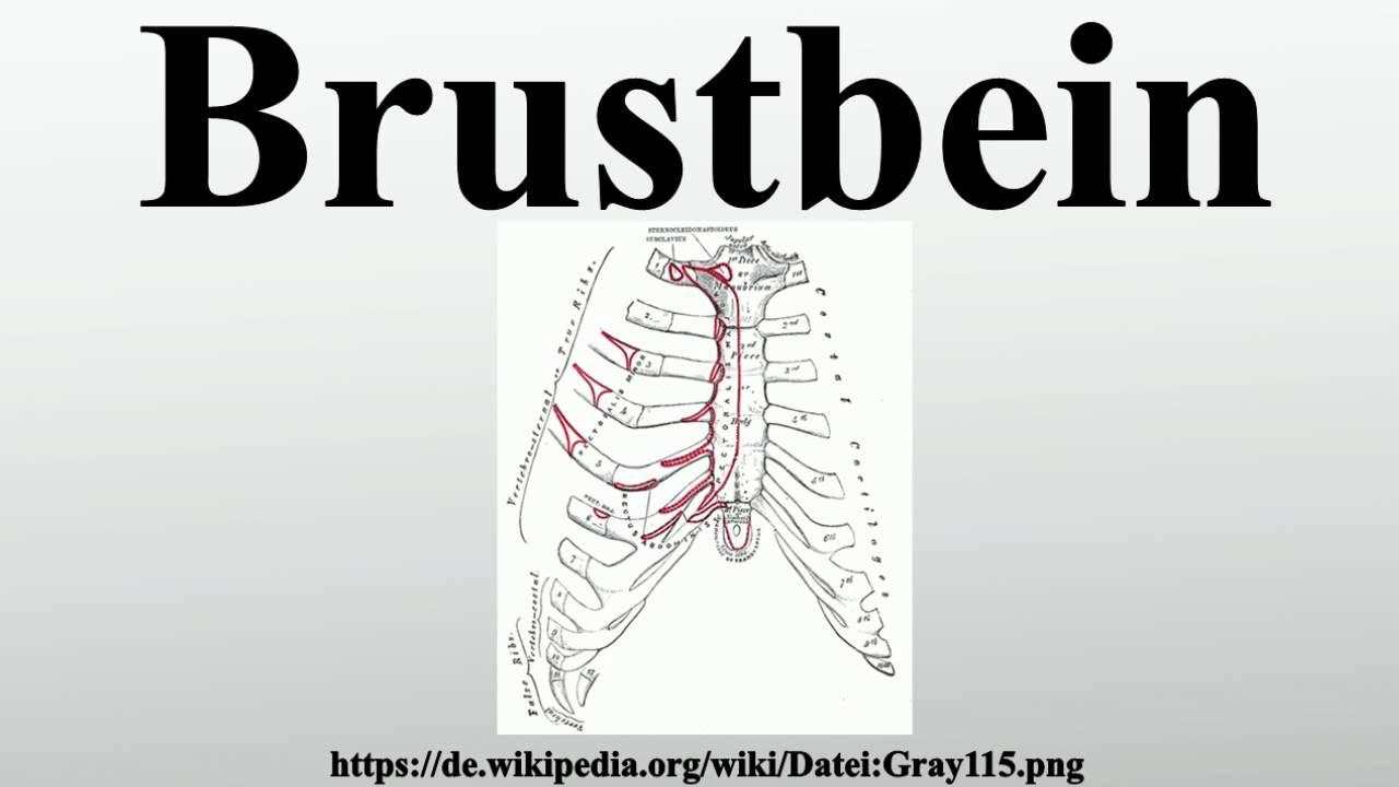 Brustbein - YouTube