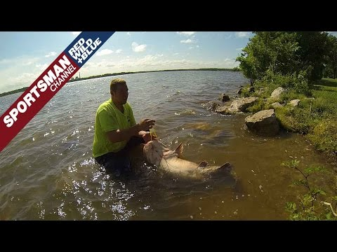 How To Properly Stringer A Large Catfish For The Art Of Hand Fishing