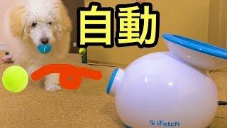 犬と永久キャッチボールができる玩具凄い!!  PDS