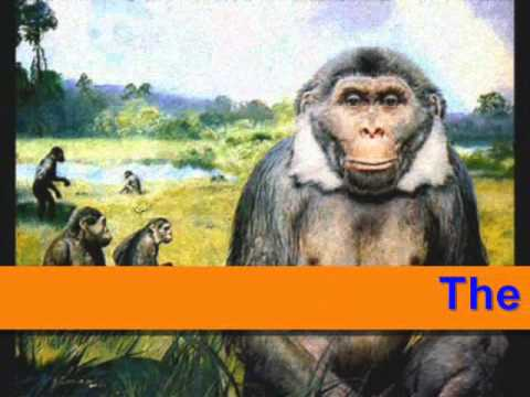 Theory of Evolution of Man by charles darwin