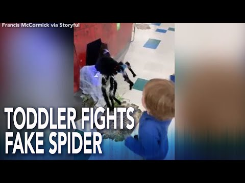 BJ the DJ - Toddler Decides To Teach A Fake Spider A Lesson