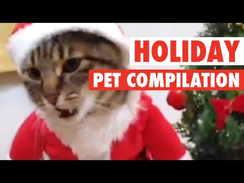 Most Hilarious Holiday Pet Moments