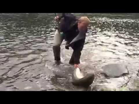 Laks 16 kg Rebergsgjerdet Orkla