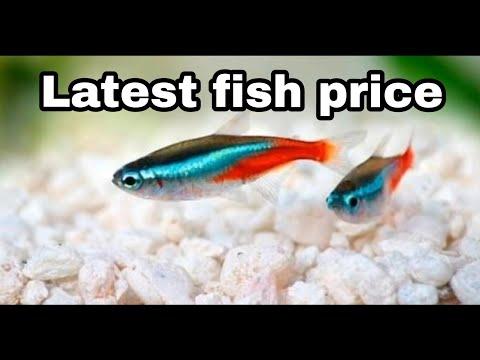 Aquarium Fish Price In India 2018 With Names