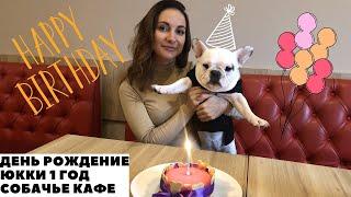 Французский Бульдог Юкки/ Идем в Собачье Кафе/ День Рождение/ 1 год.