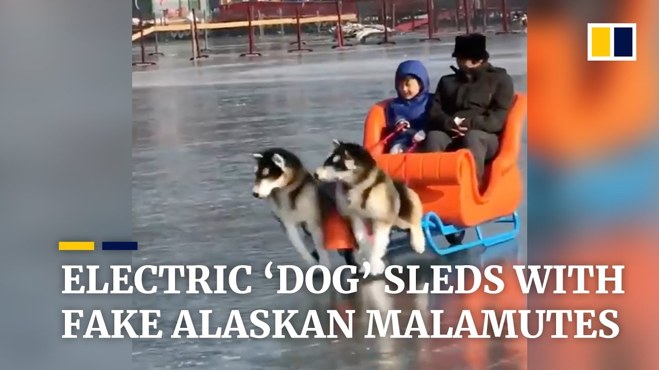 The Latest Trend In China Electric Dog Sleds With Fake Alaskan Malamutes Youtube A womb tattoo, or inmon 淫紋 (lit lewd crest or sexual demon tattoo), is a tattooed crest or magical rune located on a character's crotch or lower stomach that, as a trope, indicates sexual power emanating from or being forced upon the character. the latest trend in china electric dog sleds with fake alaskan malamutes