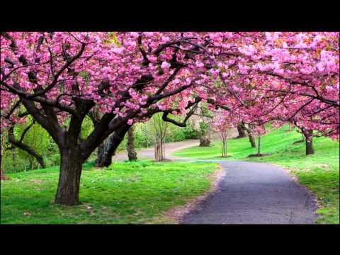 Природа, красота весны,the beauty of spring