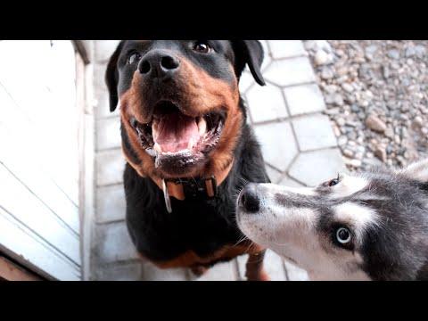 Вопрос: Можно ли собаку оставлять на зиму на неотапливаемой даче?