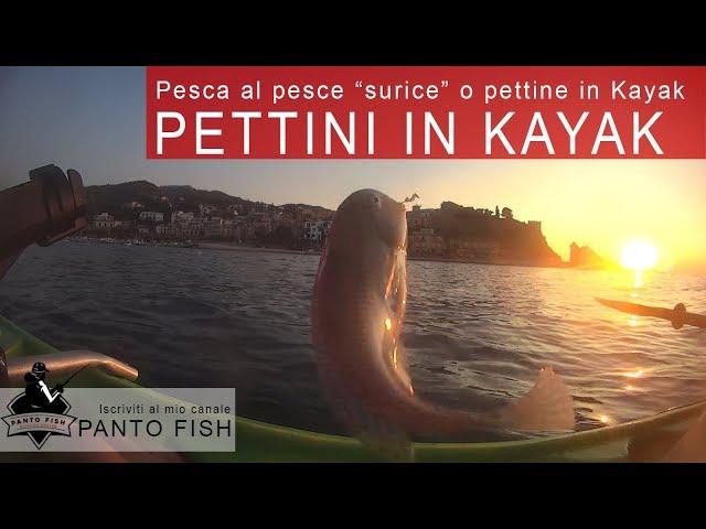Pesca in kayak al pettine (pesce surice)