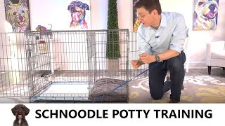 Schnoodle Potty Training from WorldFamous Dog Trainer Zak George  Potty Train a Schnoodle Puppy