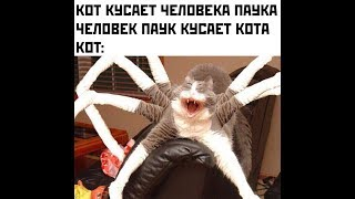 Лютые приколы ЧЕЛОВЕК ПАУК УКУСИЛ КОТА Угарные мемы