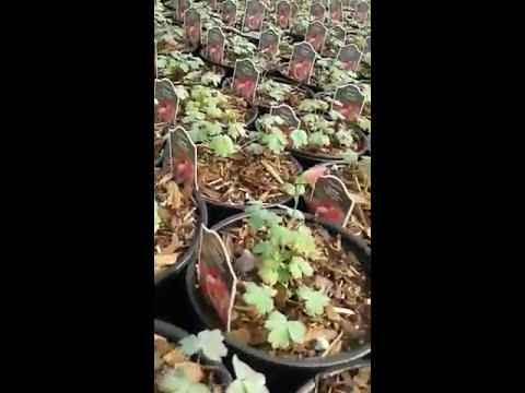 Ready for Spring 2017 season..Best Plant Nursery Ontario