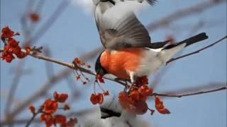 Фильм Зимующие птицы