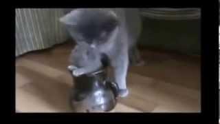 Прикольные котята. cool and funny cats