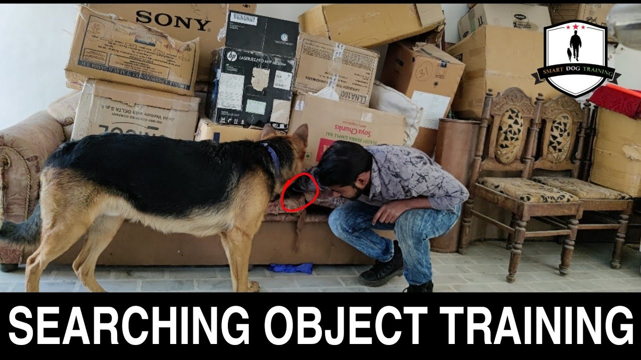 How to Train Your Dog to Find, Search or Sniffing Any Object ( Basic Dog Training in Hindi)