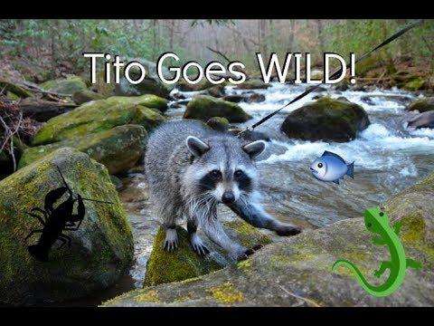 Tito Goes Wild!