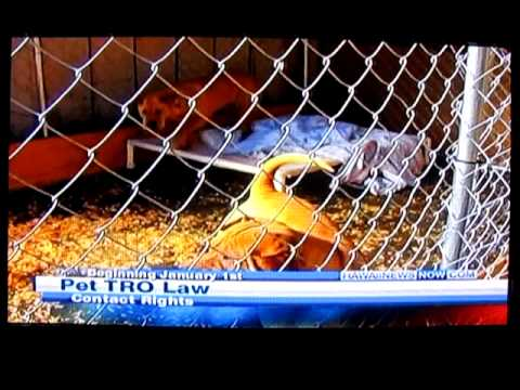 Insane Laws,Pets obtain TRO's from owners!