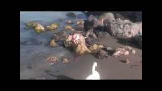 Greece. Crete. Heraklion. Греция. Крит. Ираклион(My video. 5'2008., 2012-03-21T07:13:23.000Z)