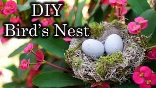 Easter / Spring Decor: Diy Bird's Nest With Spanish Moss