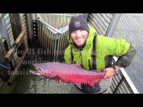 Andreafsky River Weir, Alaska