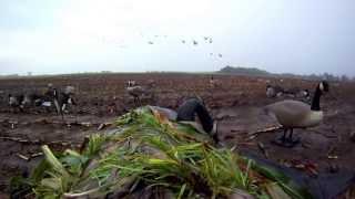 2013  Seaway Waterfowl professionals Canada Goose Hunt 79 Birds Calling Tips with Bill Saiff