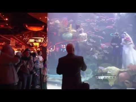 Underwater Wedding in Giant Aquarium at Silverton Casino, Las Vegas, NV