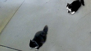 """""""The Cat Chase is On""""- The Best Cat Chase Ever!!!"""