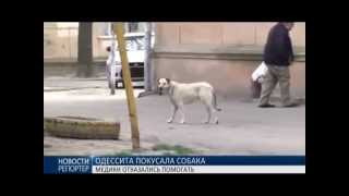 2015 04 14 Укусила собака