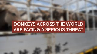 Africa's disappearing donkeys – Interview with Mike Baker