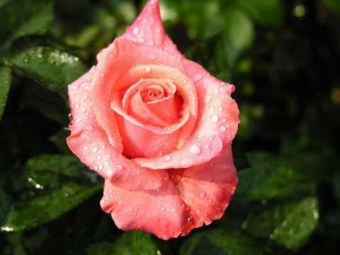 La plus belle musique douce avec les plus belles photos de fleurs - YouTube