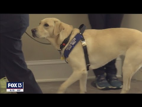 COVID-sniffing dogs detect sick patients entering Florida hospital