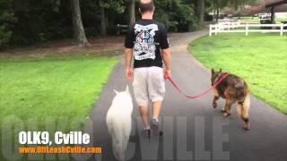 Off Leash Heeling And Loose Leash Walking | German Shepherds | Dog Training Harrisonburg