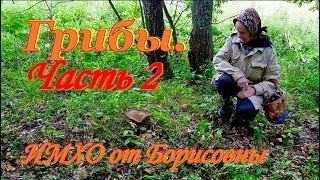 Грибы. Видео. Как правильно их собирать. ИМХО от Борисовны.
