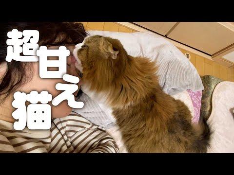 幸せしかない。子供達がいない休日の朝パパママに甘えまくる猫
