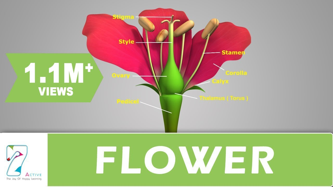 identify and label diagram of flower [ 1280 x 720 Pixel ]