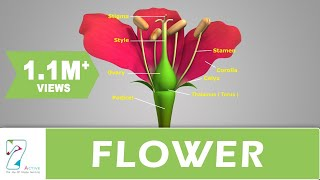 Flower Structure and its Parts