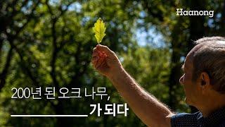 200년 된 오크나무 OOOO가 되다.