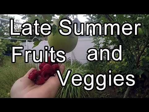 Picking Fruits and Vegetables - Long Island New York