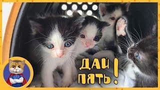 Маленькие спасенные котятки хорошо кушают и поправляются