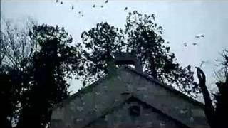 Middletown Trailer